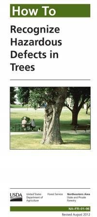 How to Recognize Hazardous Defects in Trees